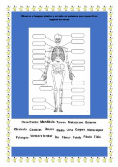 Interactive worksheet Ossos do corpo humano