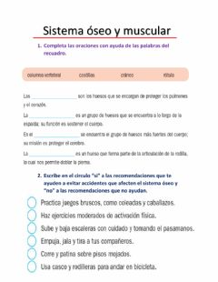 Interactive worksheet Sistema óseo y muscular