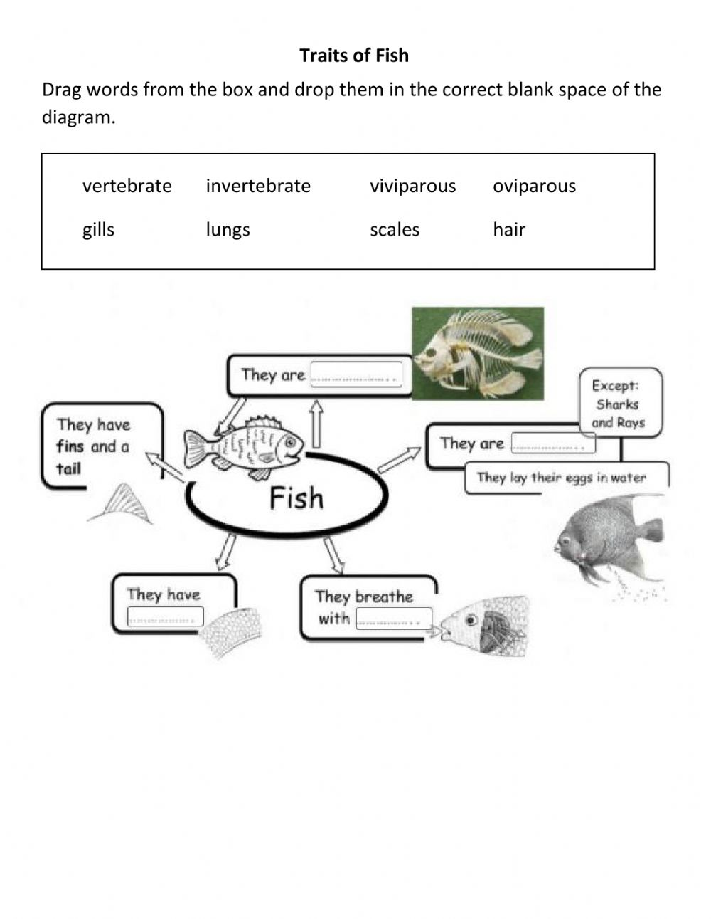 Fish traits worksheet