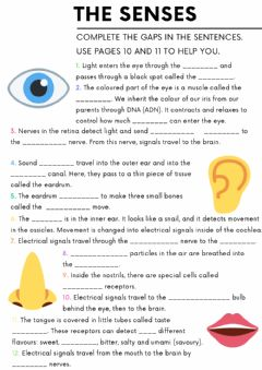 Interactive worksheet The Senses