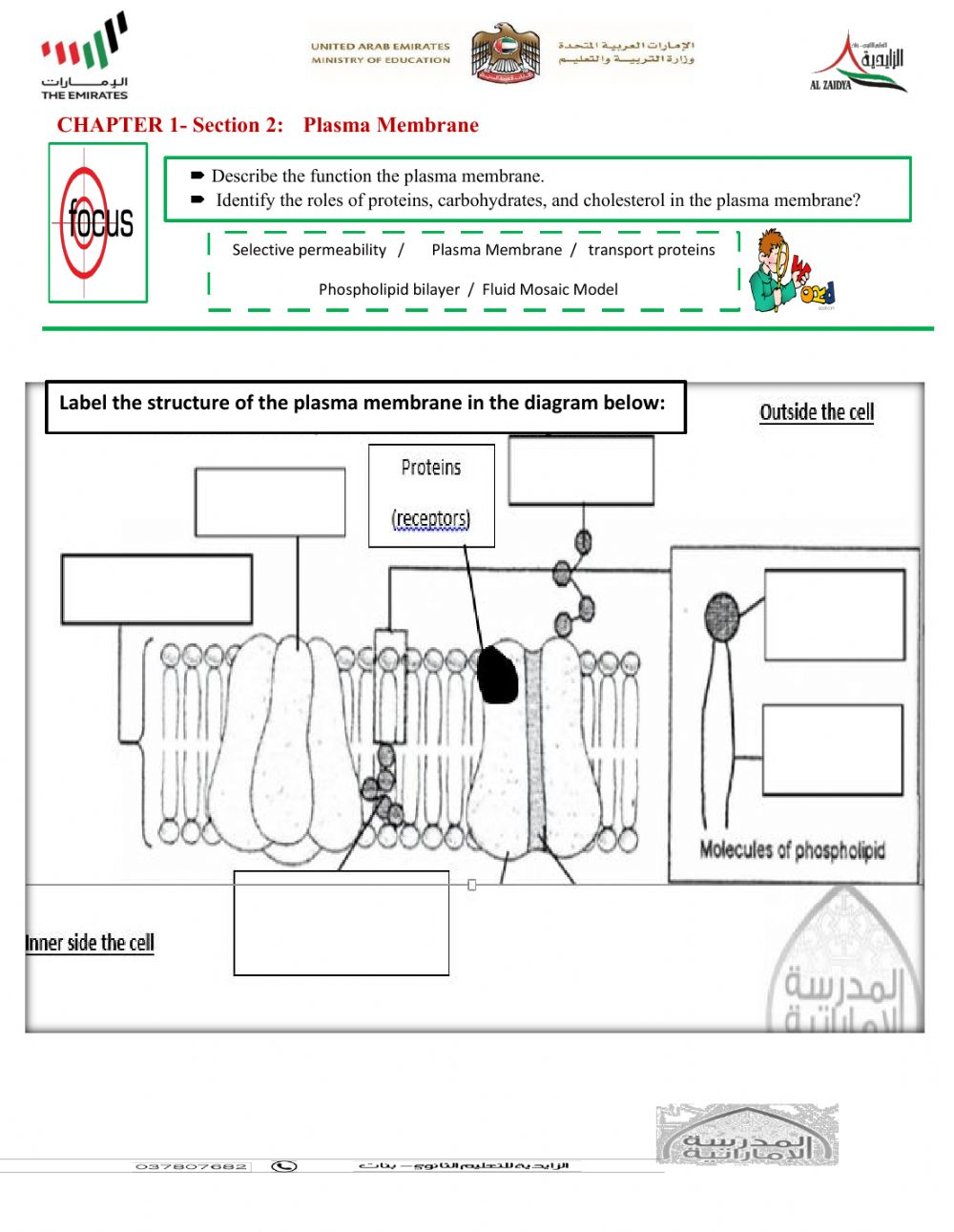 Plasma membrane Interactive worksheet