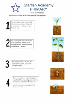 Interactive worksheet Seed Germination