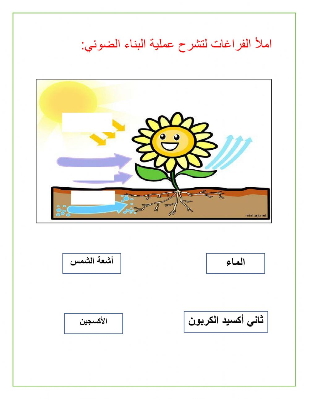 Photosynthesis zsciencez worksheet
