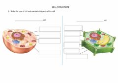 Interactive worksheet Cell structure and specialised cells