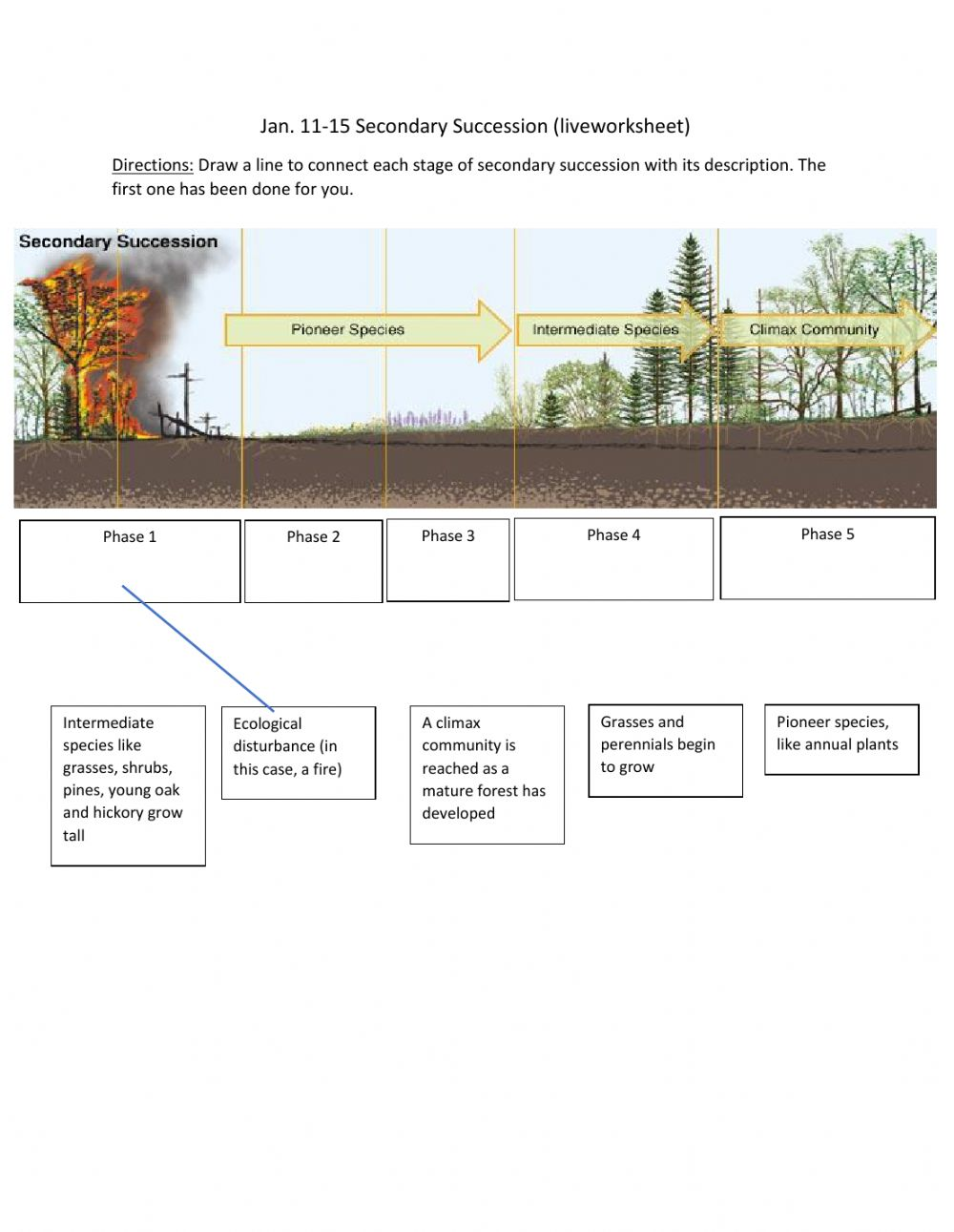 Secondary Succession worksheet