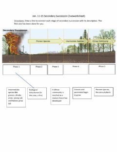Interactive worksheet Secondary Succession