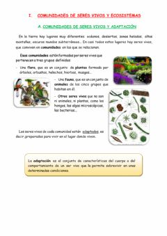 Interactive worksheet Los ecosistemas.