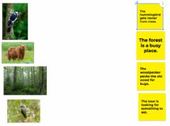 Interactive worksheet Forest matching