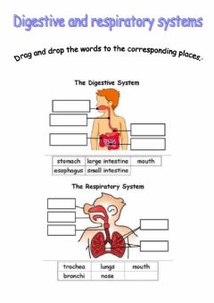 Interactive worksheet Digestive and respiratory systems