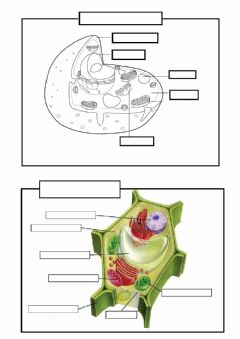 Interactive worksheet Animal and plant cell