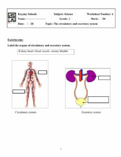 Interactive worksheet The Circulatory and Excretory Systems