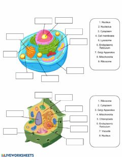 Interactive worksheet Cell Organelles