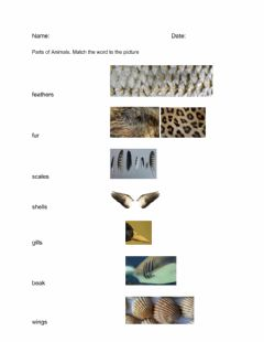 Interactive worksheet Animal Body Parts and Animal Classification