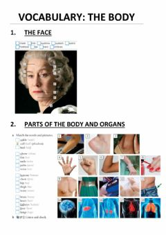 Interactive worksheet Vocabulary: the body
