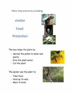 Interactive worksheet Plants and animals live together