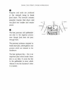 Interactive worksheet DIS Science Week 3 Comprehension p2