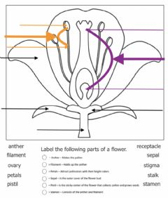 Interactive worksheet Anatomy of a Flower