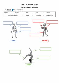 Interactive worksheet Bones, muscles and joints