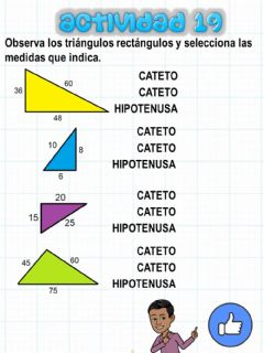Interactive worksheet Triangulo rectángulo