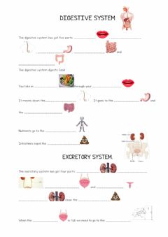 Interactive worksheet Digestive system and respiratory system