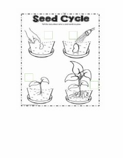 Interactive worksheet Cycle of plants