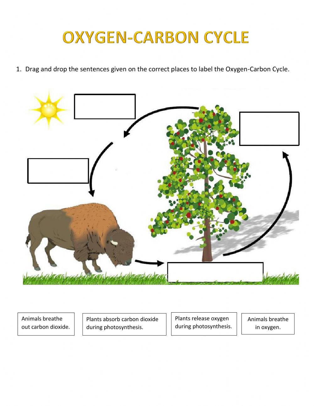 Carbon cycle on the worksheet Carbon And