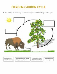 Interactive worksheet Oxygen-Carbon Cycle