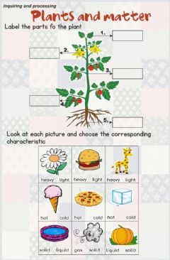 Interactive worksheet Plants and matter