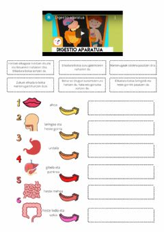 Interactive worksheet Digestio prozesua