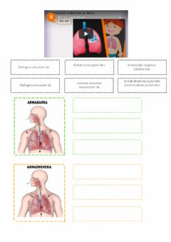 Interactive worksheet Arnasketa