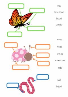 Interactive worksheet Minibeasts body parts