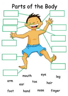 Interactive worksheet Parts of body
