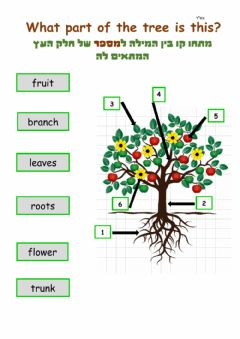 Interactive worksheet T'U Bishvat- Parts of the Tree- picture