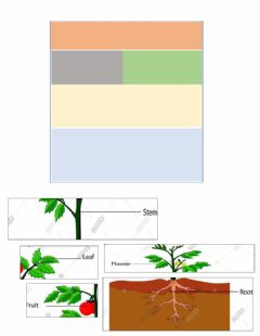 Interactive worksheet Part of the plant