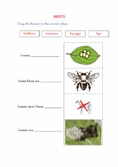 Interactive worksheet NS1 - INSECTS