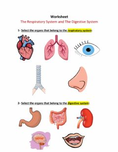 Interactive worksheet The Respiratory System and The Digestive System