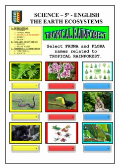 Interactive worksheet Ecosystems: terrestrial - tropical rainforest
