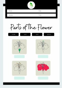 Interactive worksheet Montessori Lesson - Biology - Parts of a Flower