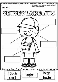 Ficha interactiva 5 senses labeling