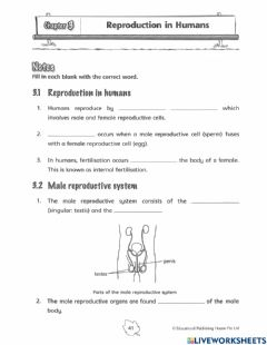 Interactive worksheet 5E2 Reproduction in humans