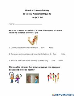 Interactive worksheet Our Muscular System
