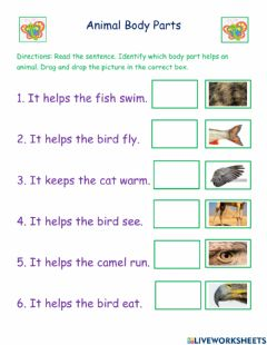Ficha interactiva Animal Body Parts Butterfly Group