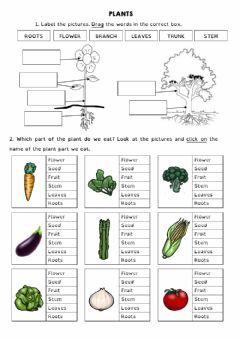 Interactive worksheet PLANTS PARTS AND JOBS YEAR 3