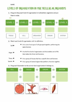 Interactive worksheet Level of organization in multicellular organisms