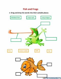 Interactive worksheet Fish and Frogs