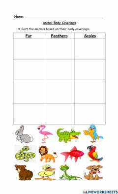 Interactive worksheet Animal Body Coverings