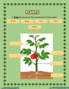 Interactive worksheet Plant