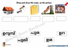 Ficha interactiva Malayalam Vocabulary Practice