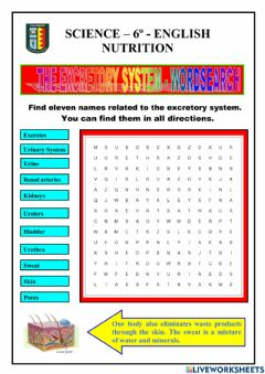 Interactive worksheet Nutrition - excrettory system