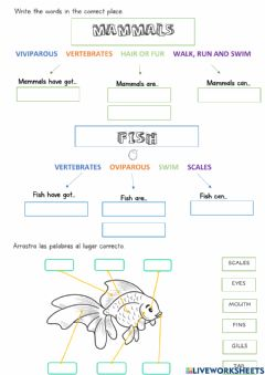 Ficha interactiva Mammals and fish